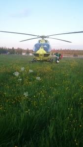 FH51 laskussa kesäisellä pellolla Posiolla.